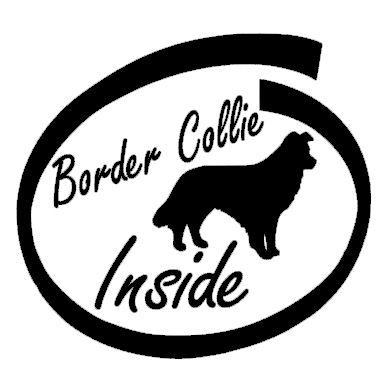 Border Collie Inside