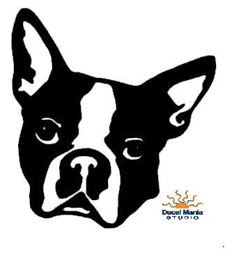 Boston Terrier Head
