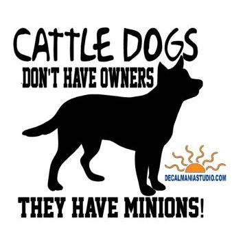 Cattle Dogs don't have Owners they have Minions